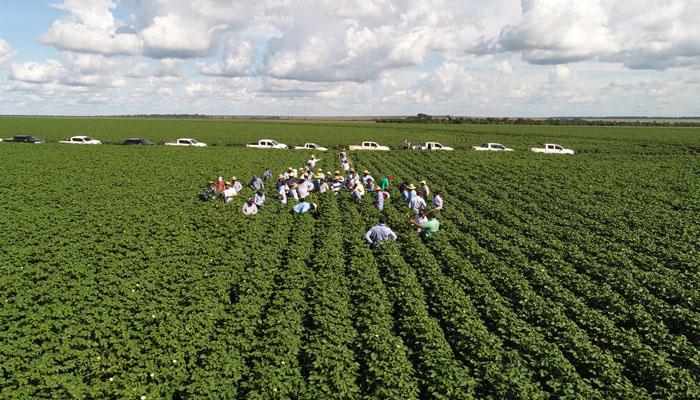 Embrapa insere algodoeiro em sistema de produção para reduzir custos