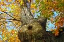 Junior Federice pede o plantio de mais árvores no perímetro urbano
